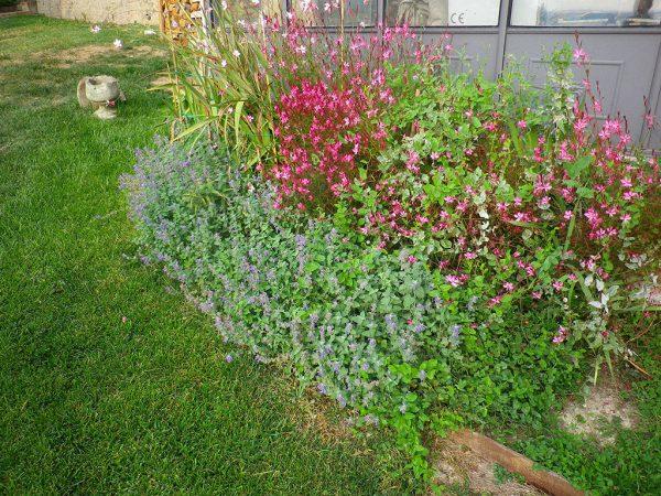 Raccolta di fiori e orti
